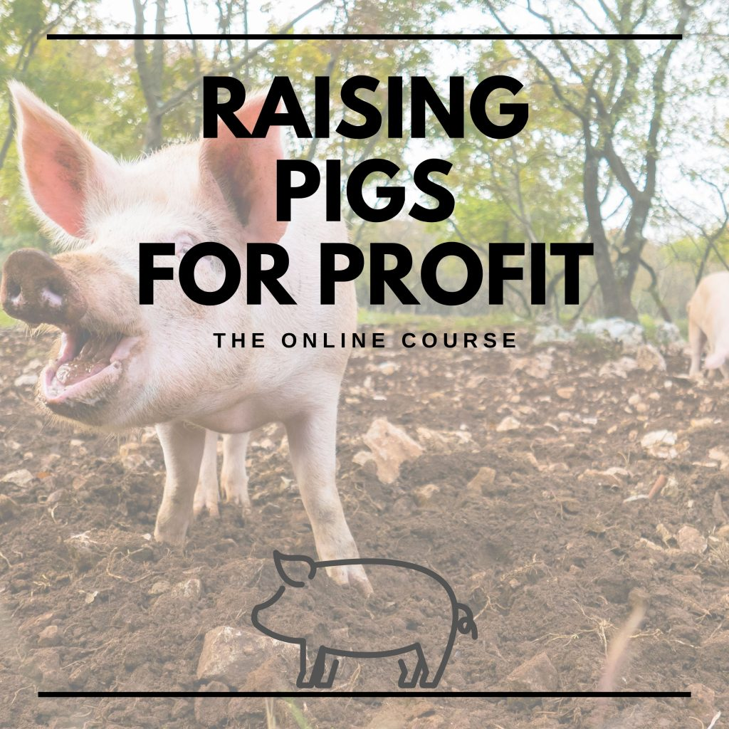How to raise pigs course